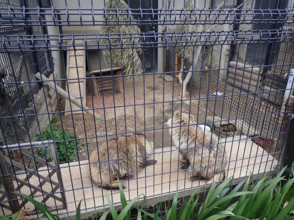 京都市動物園 子連れ
